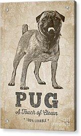 Pug A Touch Of Clown Acrylic Print by Edward Fielding