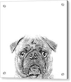 Pug Dog Sketch Acrylic Print