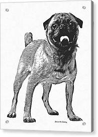 Pug Dog Standing Graphic Acrylic Print