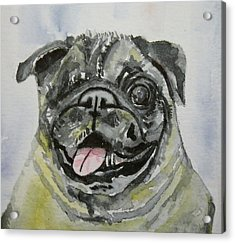 One Eyed Pug Portrait Acrylic Print