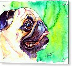 Pug Profile Acrylic Print