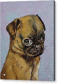 Pug Puppy Acrylic Print