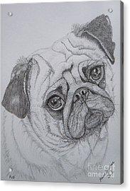 Pug Acrylic Print by Yvonne Johnstone