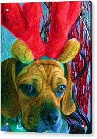 Acrylic Print featuring the photograph Puggle Holiday by Susan Carella