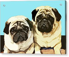 Pugs Acrylic Print