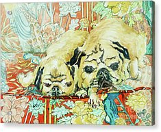 Pugs On A Chinese Print Sofa Acrylic Print