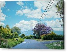 Pulehuiki Road Upcountry Kula Maui Hawaii Acrylic Print by Sharon Mau