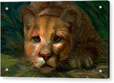 Puma 1 Acrylic Print