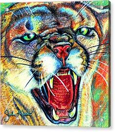 Puma Acrylic Print by John Keaton