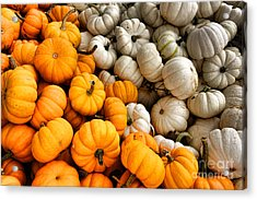 Pumpkin And Pumpkin Acrylic Print by Olivier Le Queinec