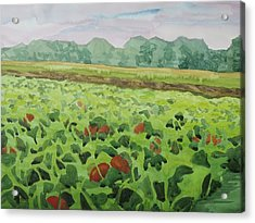 Pumpkin Field Acrylic Print by Bethany Lee