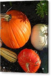 Pumpkin Acrylic Print by Heather Weikel