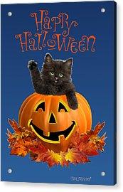 Pumpkin Kitty Acrylic Print