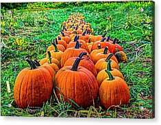 Pumpkin Patch Acrylic Print by Dale R Carlson