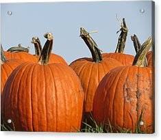 Pumpkin Patch II Acrylic Print by Kyle West