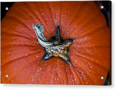 Pumpkin Stalk Acrylic Print