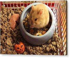 Pumpkin With Pumpkin Acrylic Print
