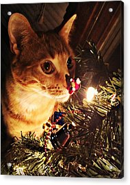 Pumpkin's First Christmas Tree Acrylic Print