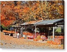 Pumpkins For Sale Acrylic Print by Louise Heusinkveld