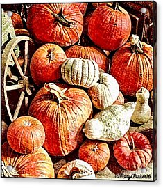 Pumpkins In The Barn Acrylic Print by MaryLee Parker