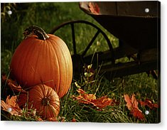Pumpkins In The Grass Acrylic Print