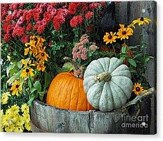 Pumpkins In Vermont Acrylic Print