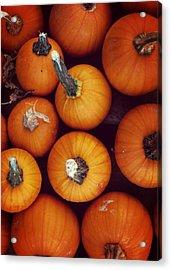 Pumpkins Acrylic Print by JAMART Photography