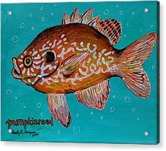 Pumpkinseed Acrylic Print by Emily Reynolds Thompson