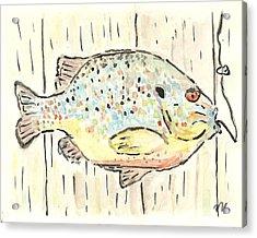 Pumpkinseed Sunfish Acrylic Print by Matt Gaudian