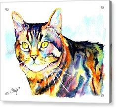 Punky Kitty  Acrylic Print by Christy  Freeman