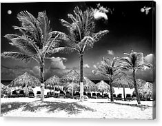 Punta Palms Acrylic Print by John Rizzuto