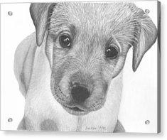Pup Acrylic Print by Sue Olson