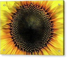 Pupil Acrylic Print