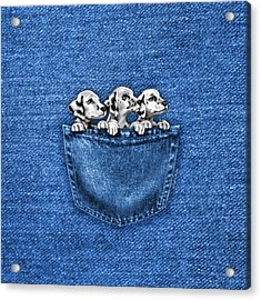 Puppies In A Pocket Acrylic Print
