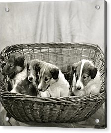 Puppies Of The Past Acrylic Print by Marilyn Hunt