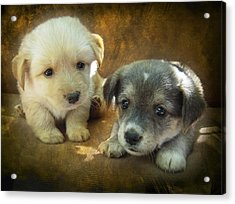 Puppies Acrylic Print by Svetlana Sewell