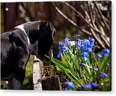 Puppy And Flowers Acrylic Print