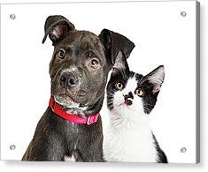 Puppy And Kitten Closeup Over White Acrylic Print by Susan Schmitz
