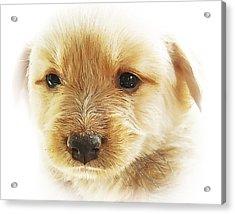 Puppy Art Acrylic Print by Svetlana Sewell