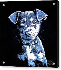 Puppy Dog Graphic Novel Drawing Acrylic Print