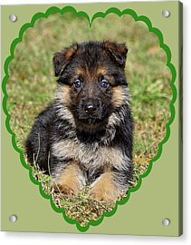 Acrylic Print featuring the photograph Puppy In Heart by Sandy Keeton