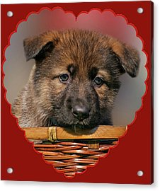 Acrylic Print featuring the photograph Puppy In Red Heart by Sandy Keeton
