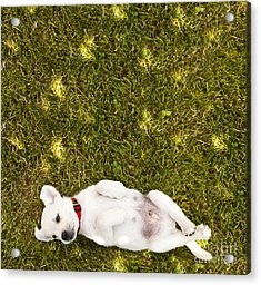 Puppy In The Grass Acrylic Print by Diane Diederich