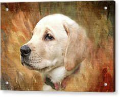 Puppy In The Grass Acrylic Print by Terry Davis