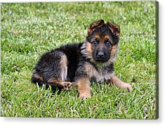 Puppy In The Spring Acrylic Print by Sandy Keeton