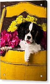 Puppy In Yellow Bucket  Acrylic Print by Garry Gay