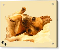 Puppy Love Acrylic Print by Amanda Vouglas