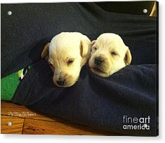 Puppy Love Acrylic Print by MaryLee Parker