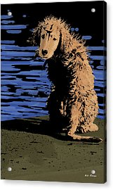 Puppy On Pier Pop Art Acrylic Print