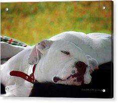 Puppy Photo Art  3 Acrylic Print by Miss Pet Sitter